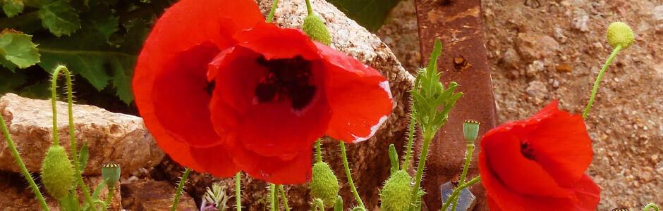 Alghero - Fra coralli e vino